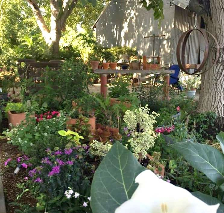 Personal beautiful & lush home garden of plant & flower expert Marlene Simon of Swoon Talent