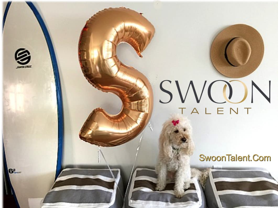 Swoon Talent - Labradoodle in Swoon Talent Ad