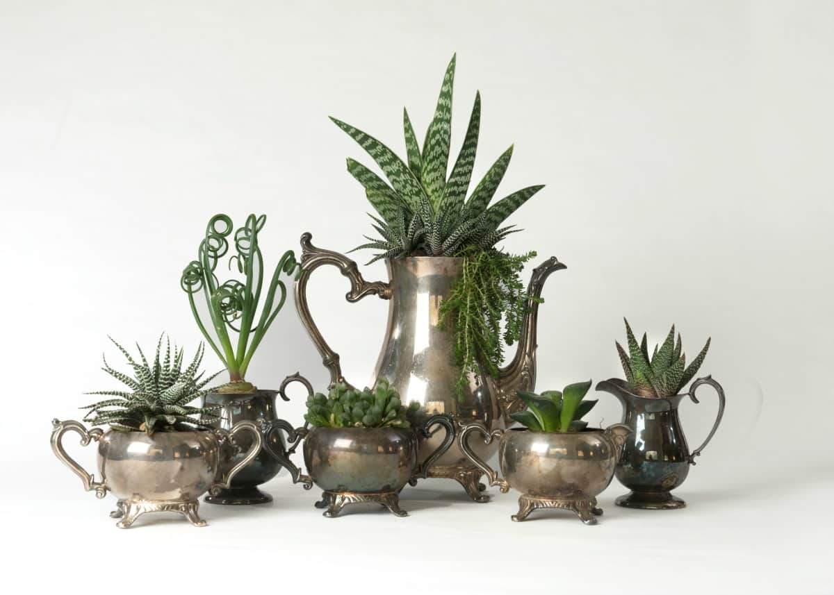 On-camera plant & flower expert Marlene Simon transformed this vintage tea set into succulent planters-Swoon Talent