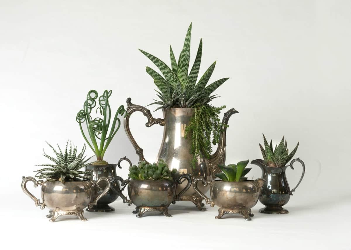 On-camera plant & flower expert Marlene Simon transformed this vintage tea set into succulent planters-Swoon Talent